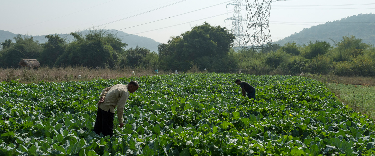 Environment & Agriculture